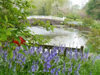 Bluebells and the moat at Newtimber Place